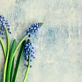 Hyacinth by Jim Franco