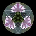 Hyacinth Kaleidoscope by Lynn Bolt