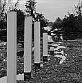 Hyacinth Pillars by Kantilal Patel