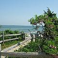 Hyannis Summer by Patricia Williams