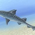 Hybodus Shark, Artwork by Richard Bizley