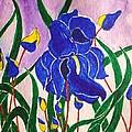 Hybrid Iris by Anuradha Mukherji