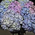 Hydrangea Boquet by Debbie Portwood