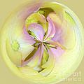 Hydrangea Circle by Sami Martin