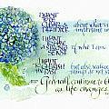 Hydrangea by Judy Dodds