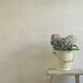 Hydrangea Resting On A Stool by Paul Grand Image