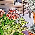 Hydrangea Sketchbook Project Down My Street by Irina Sztukowski