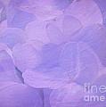 Hydrangea Whispers by Judi Bagwell