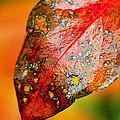I Love Fall by Lauri Novak