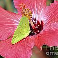 I Love My Hibiscus by TJ Baccari