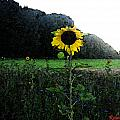 I Love Sun by Roland Reiff