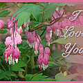 I Love You Greeting Card - Floral Bleeding Heart by Mother Nature