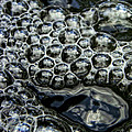 I See Bubbles by Donna Blackhall