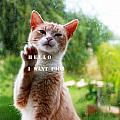 I Want Food Cat by Augusta Stylianou