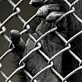 I Want Out by Greg Nyquist