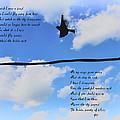I Wish I Were A Bird by Bill Cannon