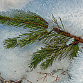 Ice Crystals And Pine Needles by Tikvah's Hope