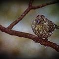 Ice Droplet Bird by LeeAnn McLaneGoetz McLaneGoetzStudioLLCcom