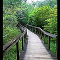 Ichetucknee Forest Pathway by Rebecca Stephens