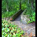 Ichetucknee Stairway by Rebecca Stephens