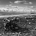 Icy Alaskan Beach by Michele Cornelius
