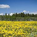 Idyllic Summer Day by Idaho Scenic Images Linda Lantzy