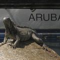 Iguana by David Gleeson