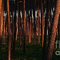 Illuminated Forest by David Gimenez Aldalur