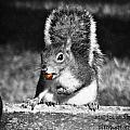 I'm A Nut Black And White by Marjorie  Smith