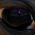 Immie's Eye by Toma Caul