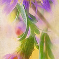 Impression Of Asters by Judi Bagwell