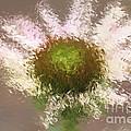 Impressionistic Echinacea by Deborah Benoit