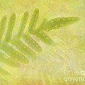 Impressions Of A Fern by Judi Bagwell