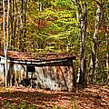 In Autumn Woods by Steve Harrington