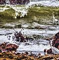 In-coming Tide by Karen Ulvestad