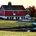 In The Barn Yard by Bill Cannon