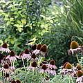 In The Garden by Travis Truelove