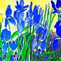 In The Iris Bed by Brenda Bergen