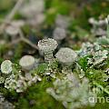 In The Land Of Little Mushrooms  by Jeff Swan