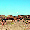 In The Petrified Forest In Arizona by Merton Allen