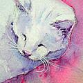 In The Pink by Lynn Presland