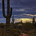 In The Shadow Of The Saguaro  by Saija  Lehtonen