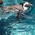 In The Swim by Elizabeth Hart