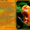 In This Life by Tikvah's Hope