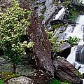 Inchquinn Waterfall, Beara Peninsula by The Irish Image Collection