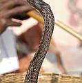 Indian Cobra by Raul Gonzalez Perez