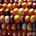 Indian Corn by Barbara McMahon
