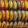 Indian Corn by Dragica  Micki Fortuna