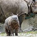 Indian Rhinoceros Rhinoceros Unicornis by Konrad Wothe