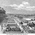 Indigo Manufacture, 1869 by Granger